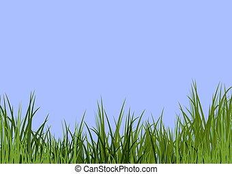 blå himmel, og, græs