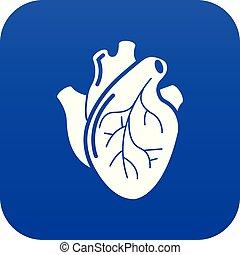 blå, hjerte, organ, vektor, menneske, ikon