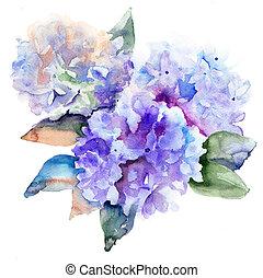blå, hortensia, vacker, blomningen