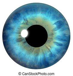 blå, iris, øje