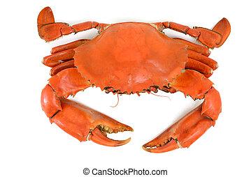 blå, kokt, krabba