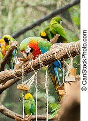 blå, macaw, træ, papegøjer, branch, fugl