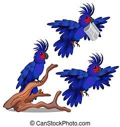 blå, närbild, vikt, papegoja, isolerat, bundet, bakgrund., vektor, vit, tecknad film, illustration.