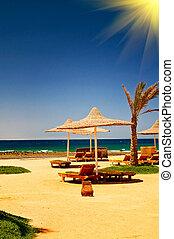 blå, sky., mot, hav, palm, parasoll