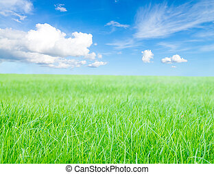 blå,  sky, sol, fält, grön,  under, Gräs, middag