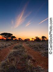 blå,  sky, träd, solnedgång,  kalahati, Gräs