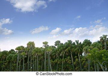 blå, sommar, florida, träd, tropisk, palm, skog, sky