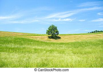 blå, træ, agerjord, himmel, grønne