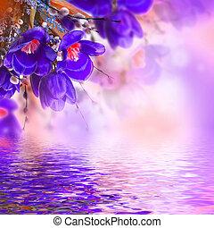 blå, tulpaner, med, mimosa, fjäder, bakgrund