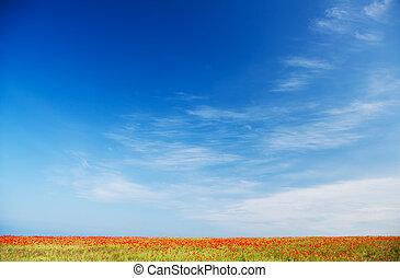blå, valmue, himmel, imod, felt