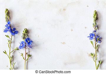 blå, wildflowers, på, den, fläckat, papper