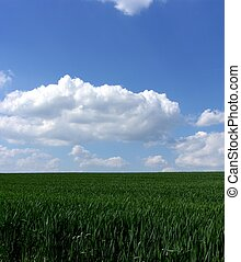 blåa gröna, gras, sky, frisk