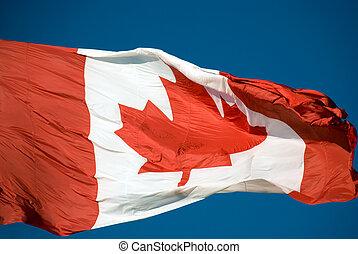 blåsning, kanadensare, -, stort, flagga, linda, closeup.