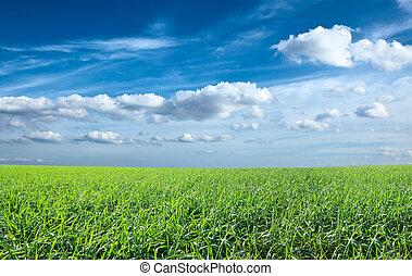 blåttsky, fält, grön, under, frisk, gräs