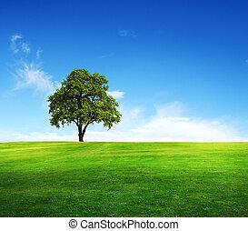 blåttsky, fält, träd