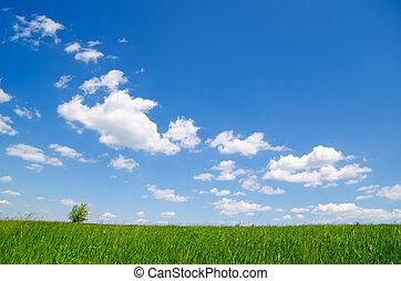 blåttsky, gräs, skyn, grön