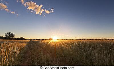 blåttsky, träd, solnedgång, kalahati, gräs