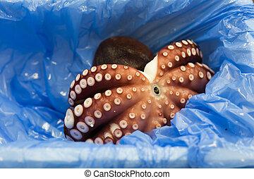 blæksprutte, afsætte, ind, tsukiji, marked, japan