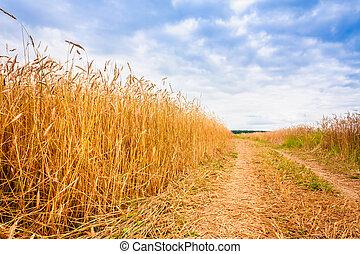 blé, campagne, champs, par, route rurale
