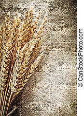 blé, doré, burlap, fond, oreilles