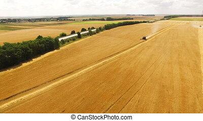blé, moissonneuse, rassemble, combiner, aérien, coucher soleil, vue