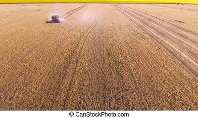 blé, moissonneuse, rassemble, combiner, vue aérienne