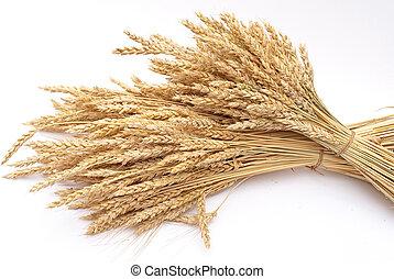 blé, oreilles