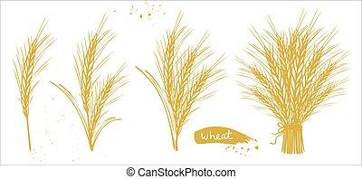 blé, oreilles, orge, doré, ensemble