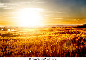 blé, paysage., coucher soleil, champs