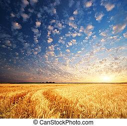 blé, pré
