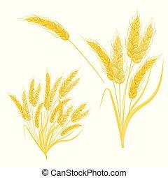 blé, réaliste, set., arrière-plan., vecteur, blanc, oreille