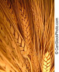 blé, tas