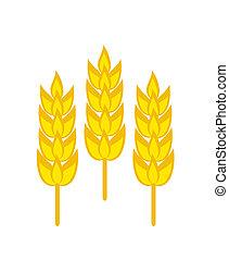 blé, trois, mûre, oreilles