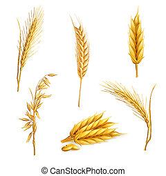 blé, vecteur, ensemble