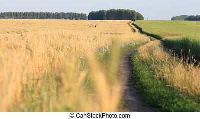 blé, vent, classé