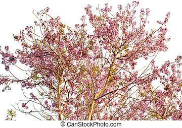 fruehjahr baum aquarell flowers bl hen gem lde landschaftsbild. Black Bedroom Furniture Sets. Home Design Ideas