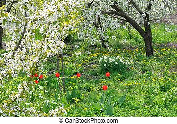 blühen, kirschbäume, auf, vordergrund