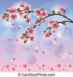 blüte, fruehjahr, -, japanisches , baum, sakura, hintergrund, kirschen