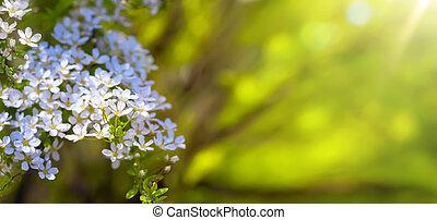 Blüte, Fruehjahr, umrandungen, hintergrund