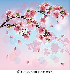 blüte, kirschen, -, japanisches , baum, sakura, hintergrund
