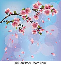 blüte, kirschen, -, sakura, japanisches