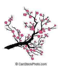 blüte, pflaume, japanisches