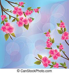 blüte, sakura, hintergrund