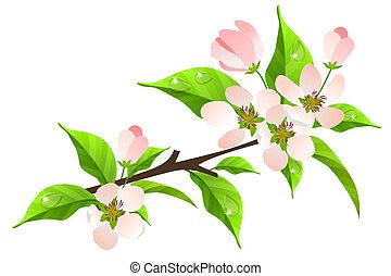 blüte, weißes, baum, apfel, zweig