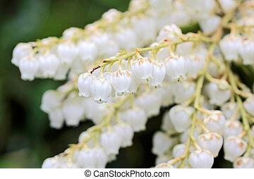 blüten, weißes