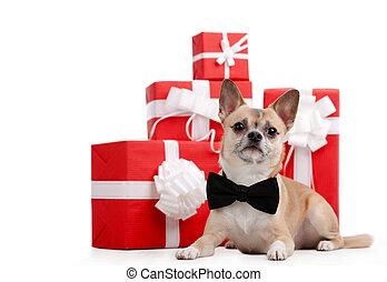 blaß, gelber , doggy, lies, bei, der, geschenke