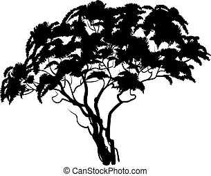 Black african acacia tree silhouette. Vector illustration
