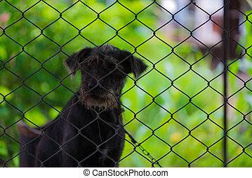 Black aggressive dog in the cage.