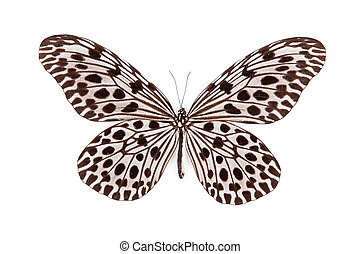 Black and blue butterfly Idea lynceus isolated on white background