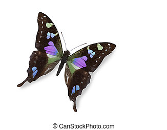 Black and blue butterfly isolated over white